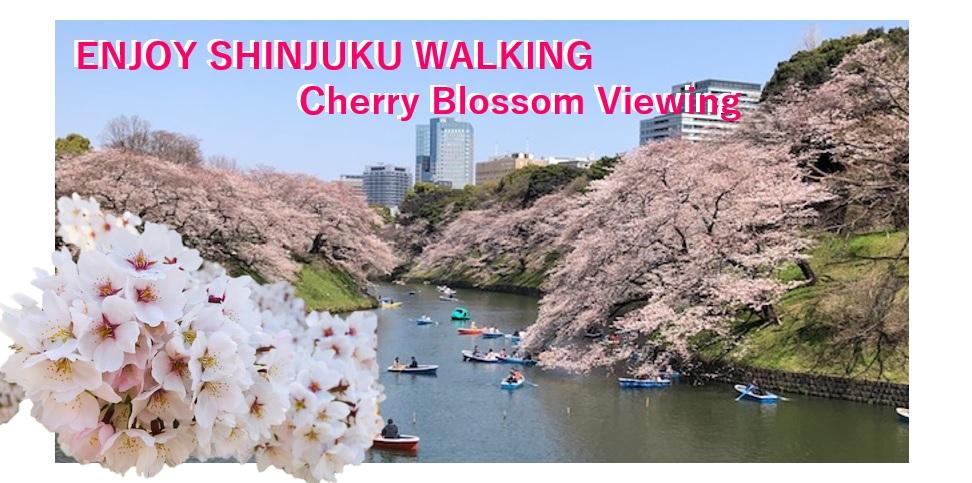 ENJOY SHINJUKU WALKING – Cherry Blossom Viewing
