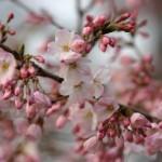 新宿で春の歓迎会♪幹事さん応援します!!