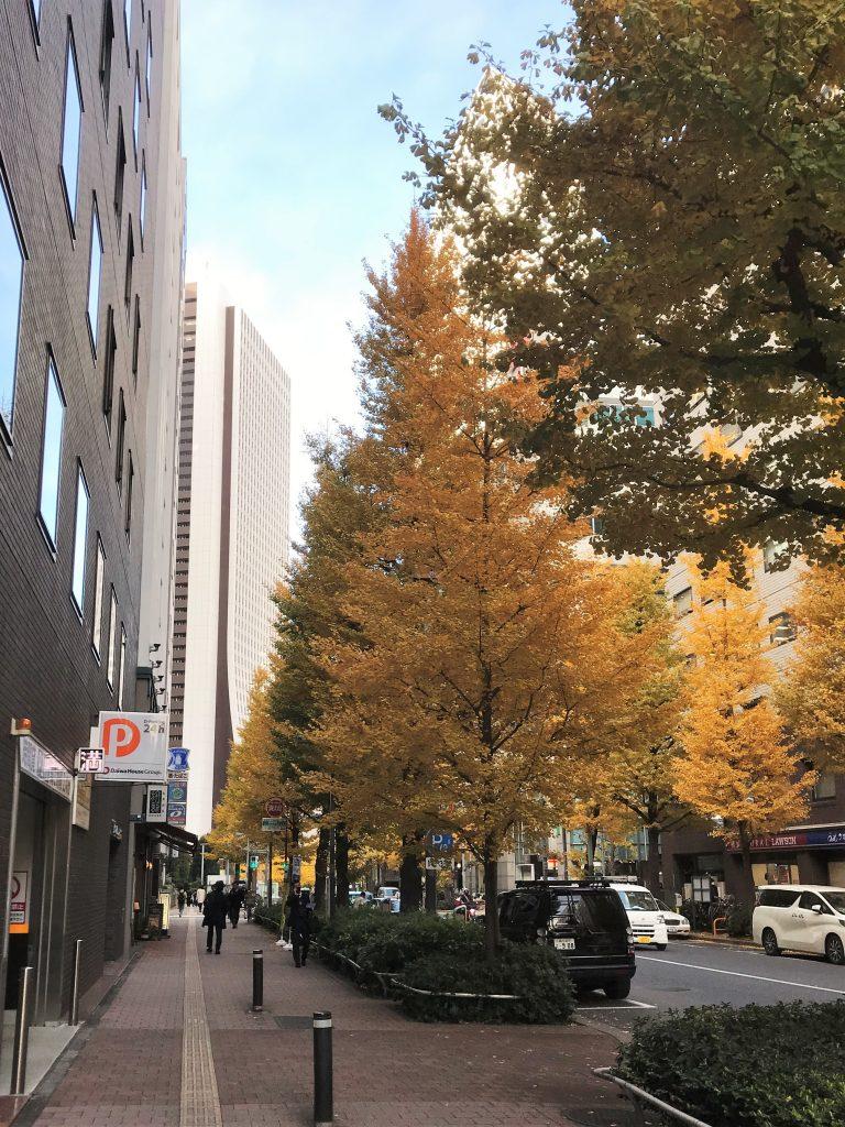 西新宿個室居酒屋はたごの前の通りのイチョウ並木が綺麗に黄葉しています。