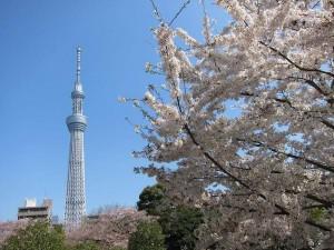 新宿高速バスターミナルからすぐのかどやホテルは春休み家族旅行を応援