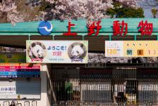 東京観光・家族旅行におすすめ!上野動物園までの行き方編。新宿かどやホテル