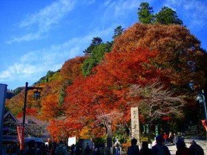 高尾山へアクセス簡単!新宿発!!秋の紅葉を見に行こう