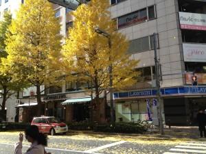 紅葉が見ごろです。新宿の街も、秋から冬へ。新宿かどやホテルより。