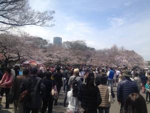 【お花見】桜が満開!上野公園まで電車で1本、新宿駅西口3分、かどやホテル。