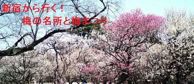 新宿から行く!梅の名所と梅まつり