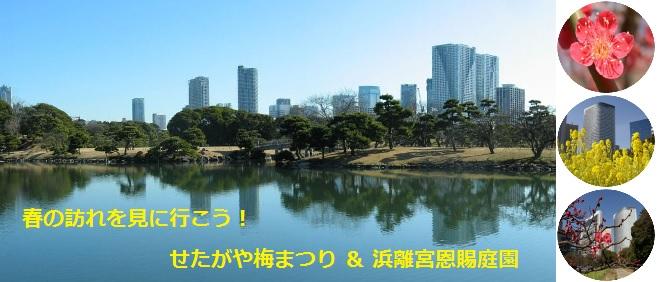 菜の花と梅の花が見ごろを迎えました!新宿かどやホテルから春の訪れを見に行こう!