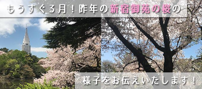 桜の季節が恋しいですね。昨年の新宿御苑の桜を紹介