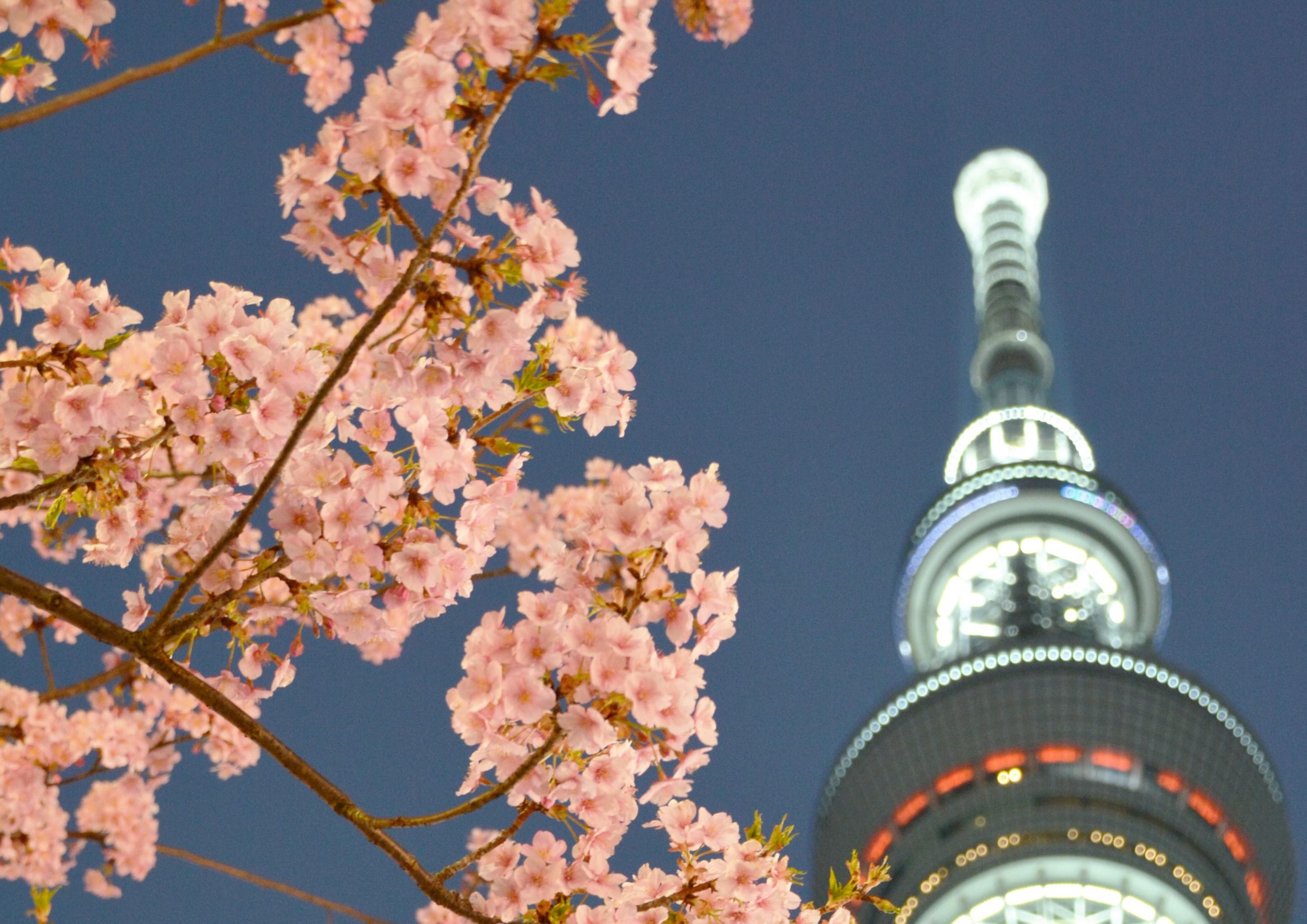 ☆仕事終わりの東京夜桜☆ビール&かどやホテルオリジナルおつまみ付きプラン