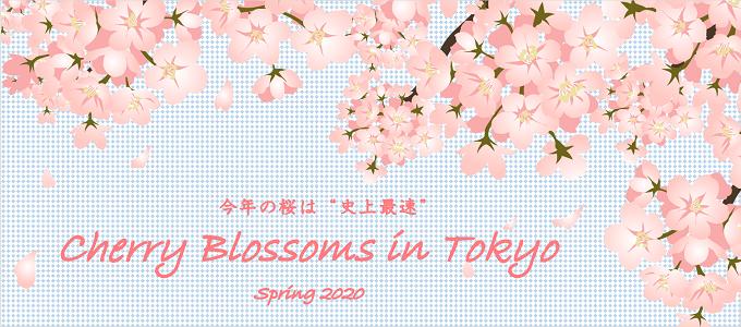 今年も桜の季節になりました♪